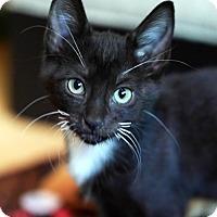 Adopt A Pet :: Bibi - N. Billerica, MA