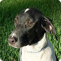 Adopt A Pet :: Rubin AD 11-16-16 - Preston, CT
