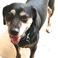 Adopt A Pet :: Dapper Dan - MEET HIM - Norwalk, CT