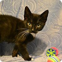 Adopt A Pet :: Tin Tin - Oyster Bay, NY