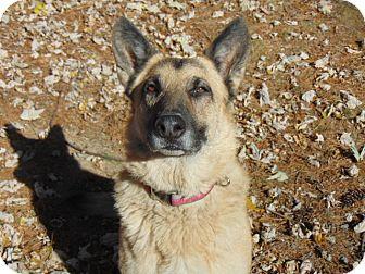 German Shepherd Dog Mix Dog for adoption in Portland, Maine - Karma