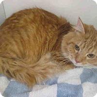 Adopt A Pet :: Morris - Arlington, VA
