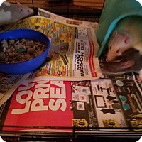 Adopt A Pet :: 4 boys - Kenosha, WI