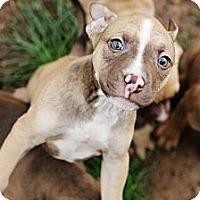 Adopt A Pet :: Herb - Reisterstown, MD
