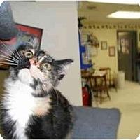 Adopt A Pet :: Pudgey Pie - Milwaukee, WI