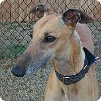 Adopt A Pet :: Wendy - Oklahoma City, OK