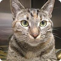 Adopt A Pet :: Momma - Newport Beach, CA
