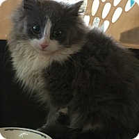 Adopt A Pet :: Squirt - Ogallala, NE