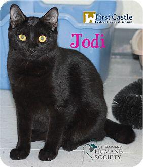 Domestic Shorthair Kitten for adoption in Covington, Louisiana - Jodi