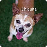 Adopt A Pet :: Chiquita - Encinitas (San Diego), CA
