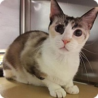 Adopt A Pet :: Peaches - Fullerton, CA