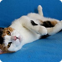 Adopt A Pet :: I'M TARA! PLEASE GIVE ME BELLY RUBS! - jacksonville, FL