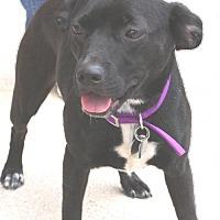 Adopt A Pet :: Daisy Dee - Winfield, PA