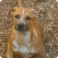 Adopt A Pet :: Jonah - Washington, DC