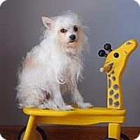 Adopt A Pet :: Freddie - Milan, NY
