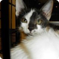 Adopt A Pet :: Tori - Fort Lauderdale, FL