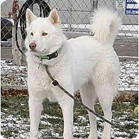 Adopt A Pet :: Misty - Meridian, ID