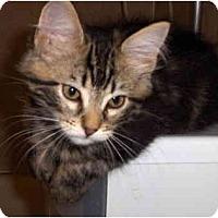Adopt A Pet :: Hunter - Davis, CA
