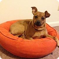 Adopt A Pet :: Enzo - Greenville, SC