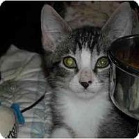 Adopt A Pet :: Kiley - Riverside, RI