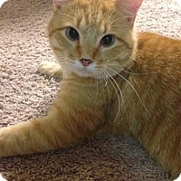 Adopt A Pet :: Simba - Eagan, MN