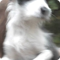 Adopt A Pet :: Chelsea - Foster, RI