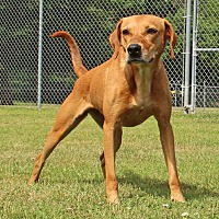 Hound (Unknown Type) Mix Dog for adoption in Savannah, Tennessee - Joyce