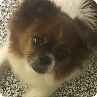 Adopt A Pet :: Dani - Washington, PA