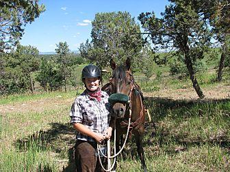 Quarterhorse Mix for adoption in Bayfield, Colorado - Jack