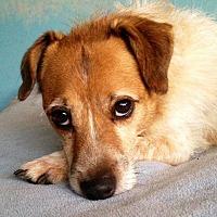 Adopt A Pet :: Sharkey - South Bend, IN