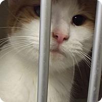 Adopt A Pet :: RUSTY - Cheboygan, MI