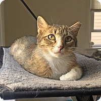 Adopt A Pet :: Elle - East Brunswick, NJ