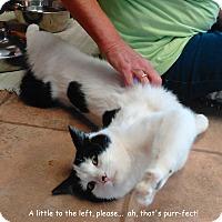 Adopt A Pet :: Checkers - Cloquet, MN