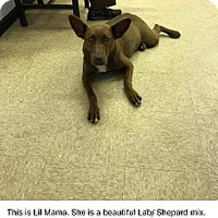 Adopt A Pet :: Lil Moma - Winsted, CT