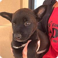 Adopt A Pet :: Mystique - Fresno, CA