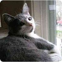 Adopt A Pet :: Beatrix - Portland, OR