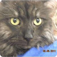 Adopt A Pet :: Dusty - Riverside, RI
