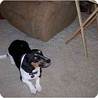 Adopt A Pet :: Stewie - Waukesha, WI