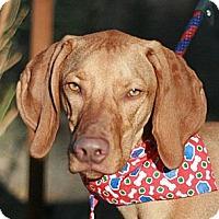 Adopt A Pet :: Omally - Canoga Park, CA