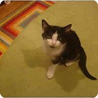 Adopt A Pet :: Tara - Muncie, IN