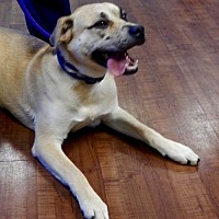 Adopt A Pet :: Hank - Amarillo, TX