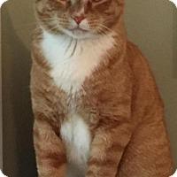 Adopt A Pet :: BEN - Hamilton, NJ