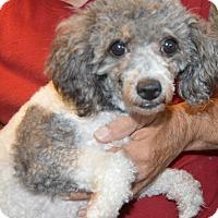 Adopt A Pet :: Kayla - Prole, IA