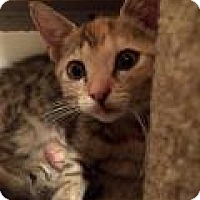 Adopt A Pet :: Misotis - East Hanover, NJ