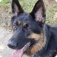 Adopt A Pet :: Krieger - Houston, TX