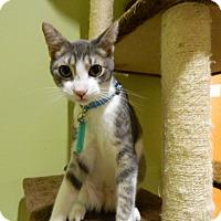Adopt A Pet :: Beckett - The Colony, TX