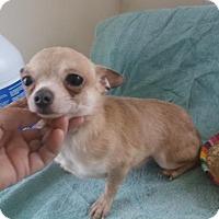 Adopt A Pet :: Pepe - Bonifay, FL