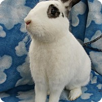 Adopt A Pet :: Jade #2 - Baton Rouge, LA