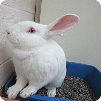 Adopt A Pet :: Hocus Pocus - Newport, DE
