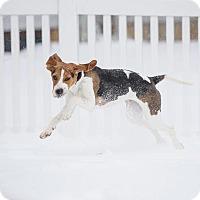 Adopt A Pet :: Ruby - Whitehouse Station, NJ